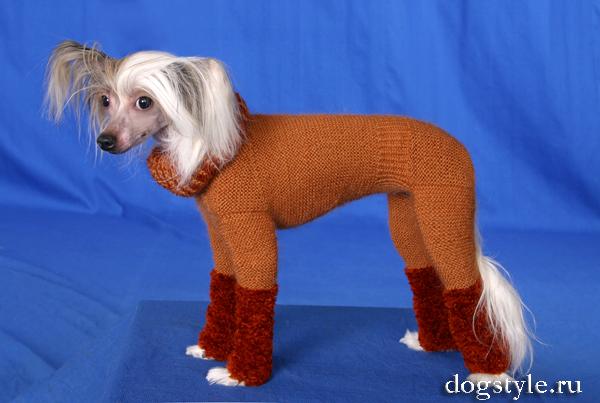 Одежда для собак своими руками китайская хохлатая
