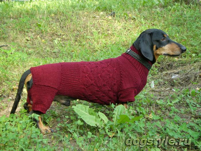 Одежда для такс вязание