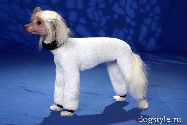 вязан кофти. вязаные комбинезоны для собак.