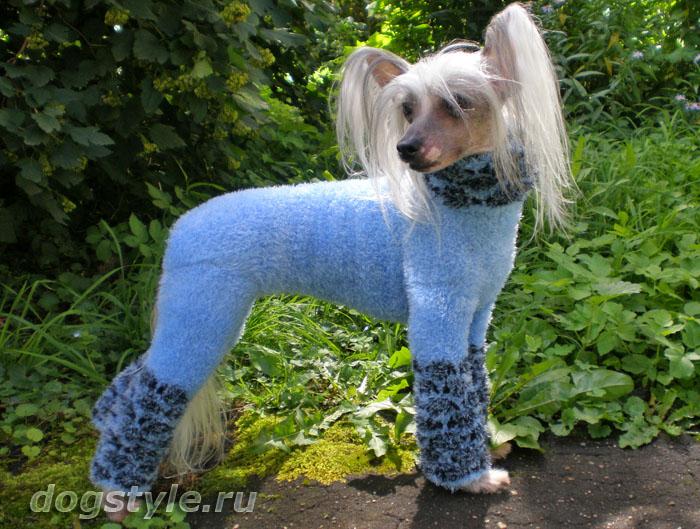 Одежда для китайской хохлатой собак своими руками выкройки