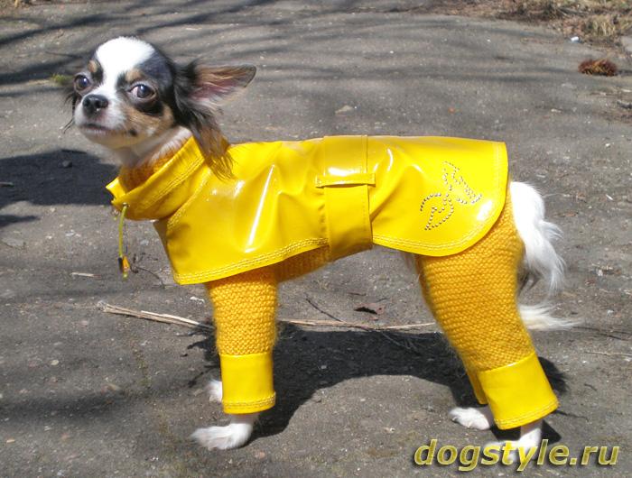 Одежда для собак вязаная