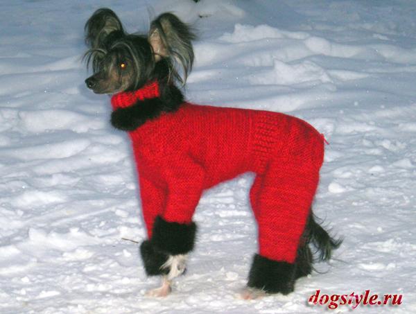 Выкройки одежды для собак для чихуа